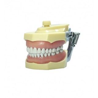 Manequim de Dentística 3001 - MOM