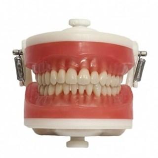 Manequim de Dentística PD 100 - PRONEW