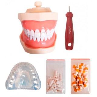 Manequim Materiais Dentários Completo 3014 - MOM