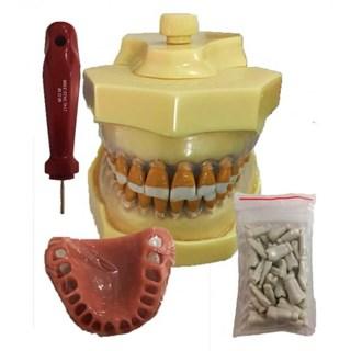 Manequim Materiais Dentários Completo 3015 - MOM
