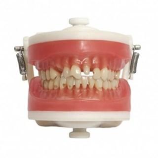 Manequim Materiais Dentários PD 101 - PRONEW